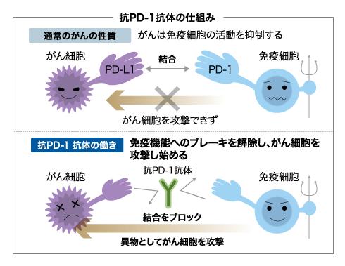 坑PD-1抗体の仕組み