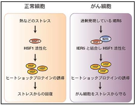 akiramenai_gk20160229_si_img